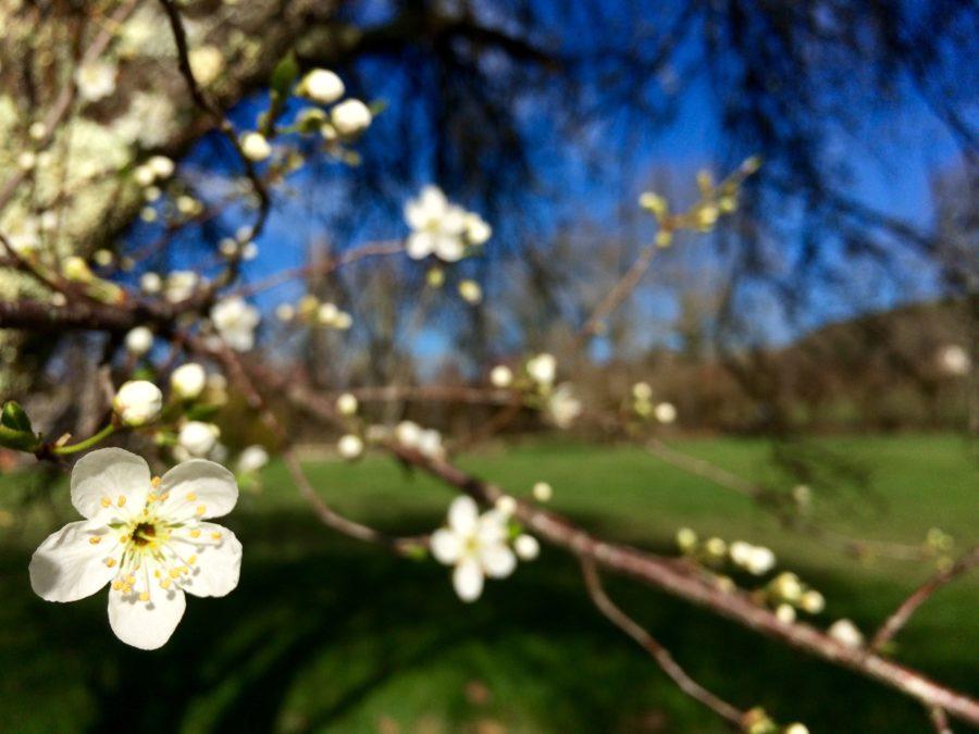 10 programas para curtir a primavera em Paris