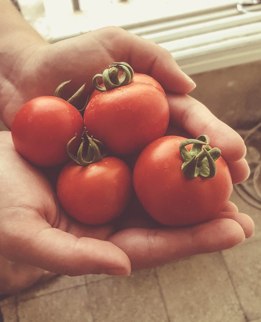 Vamos plantar tomates?